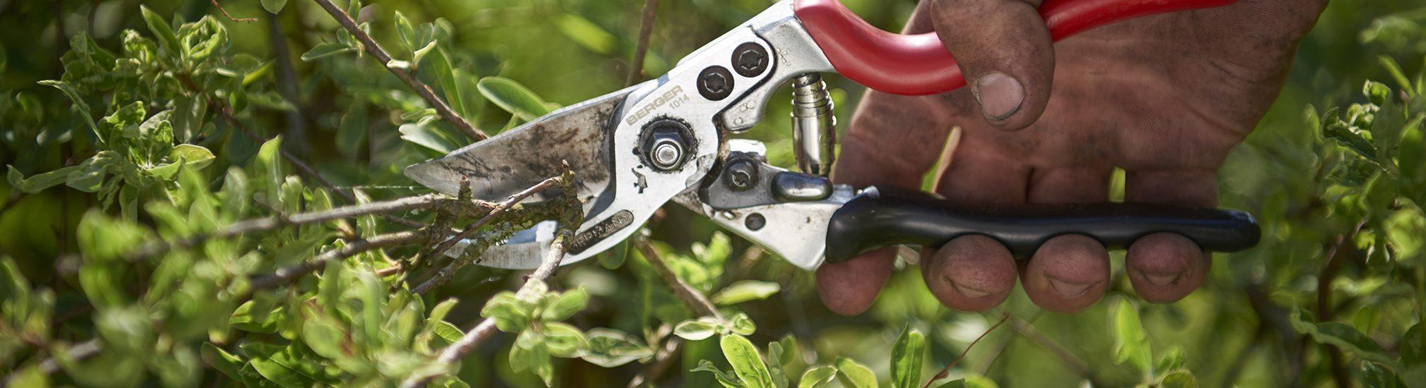 Amstutz Gartenbau AG, Gartenbau, Gartenunterhalt, Pflanzen schneiden