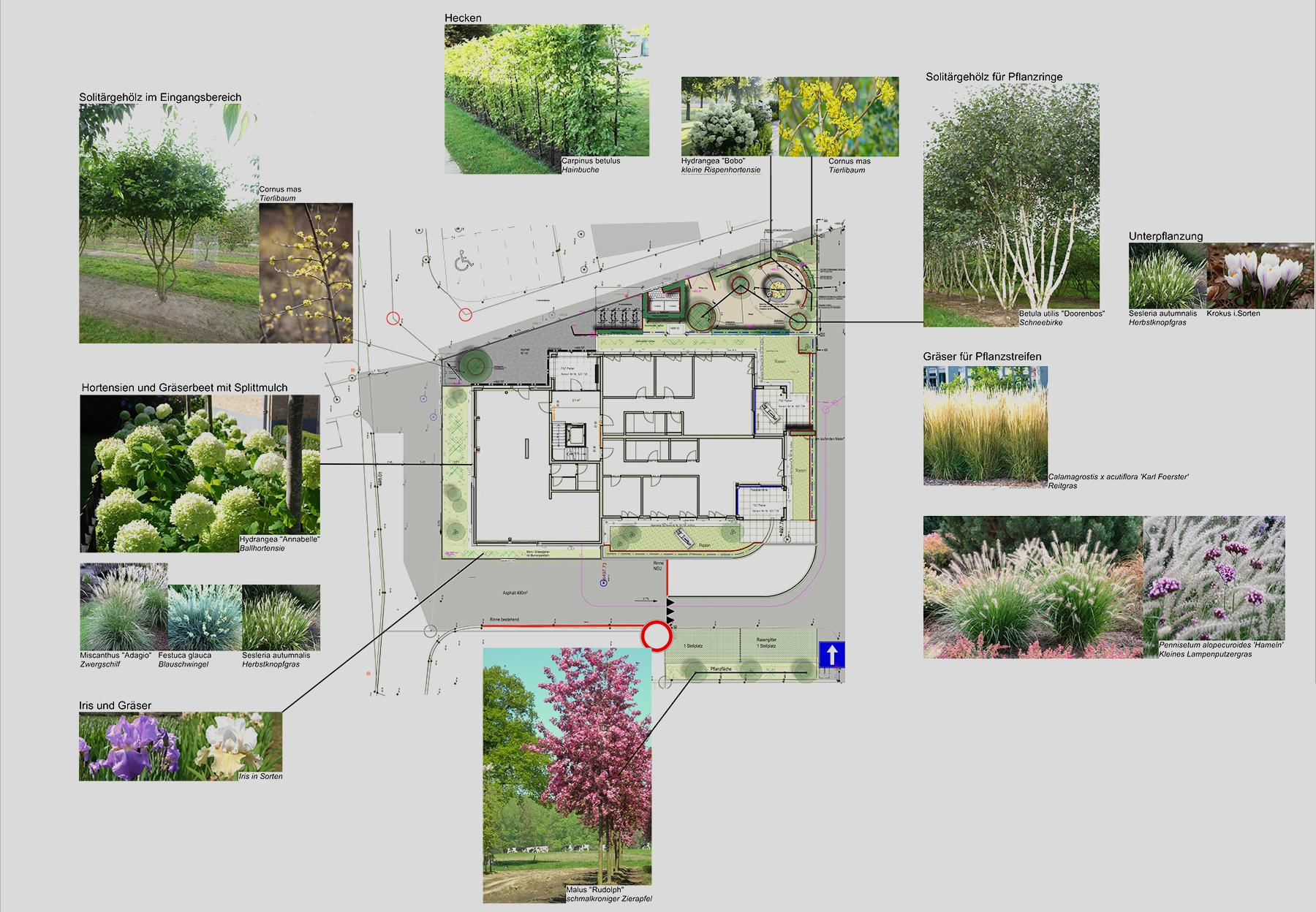 Amstutz Gartenbau, Gartenplanung, Pflanzenplan