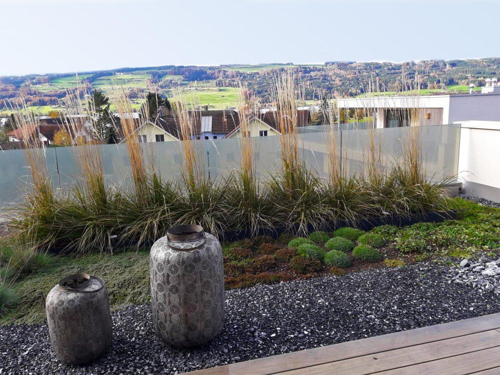 Amstutz Gartenbau AG, Dachgaerten, Graeserhecke mit Staudenpflanzung