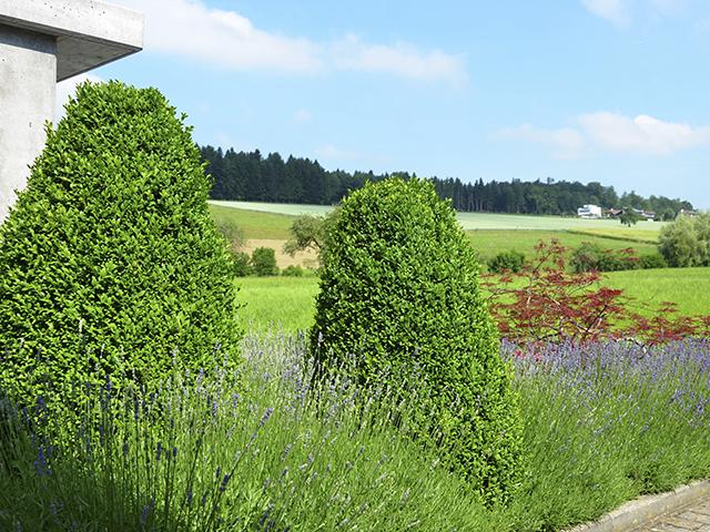 Amstutz Gartenbau, Pflanzungen-Bluetenstaude, Bodendeckend