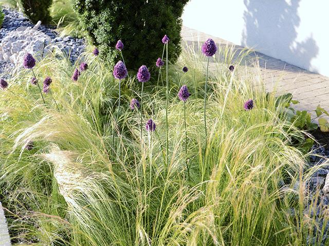 Amstutz Gartenbau AG, Pflanzungen, Graeser
